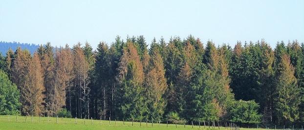 Forêts et scolytes