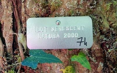Maintien d'arbres pour la biodiversité (îlots de sénescence)