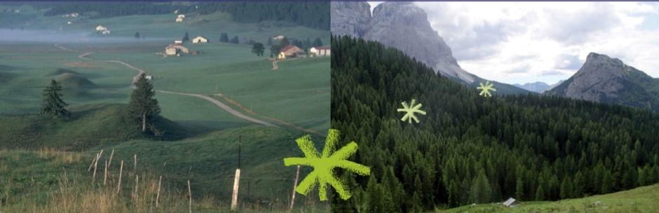 Bosco-al-legno.jpg